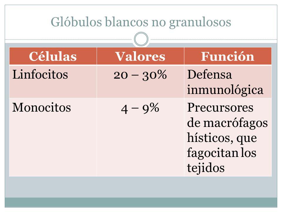 Glóbulos blancos no granulosos CélulasValoresFunción Linfocitos20 – 30%Defensa inmunológica Monocitos4 – 9%Precursores de macrófagos hísticos, que fagocitan los tejidos