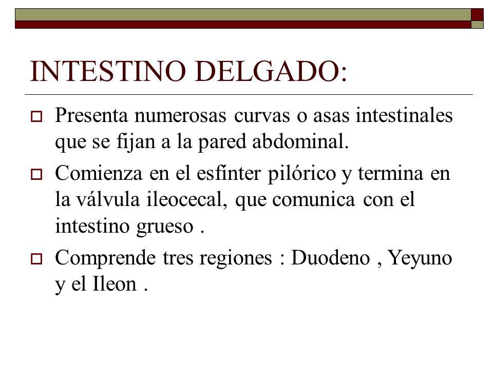 ESTUDIO ANATOMICO Y FISIOLOGICO DEL APARATO DIGESTIVO. - ppt descargar