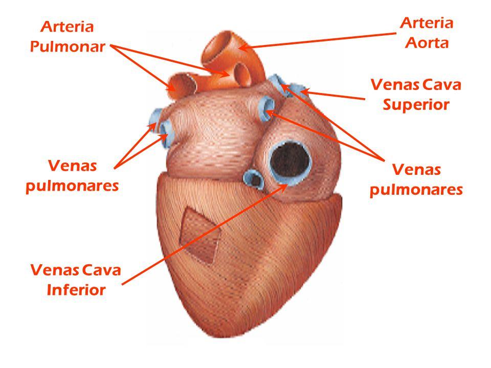 El Corazón. copy1 on emaze