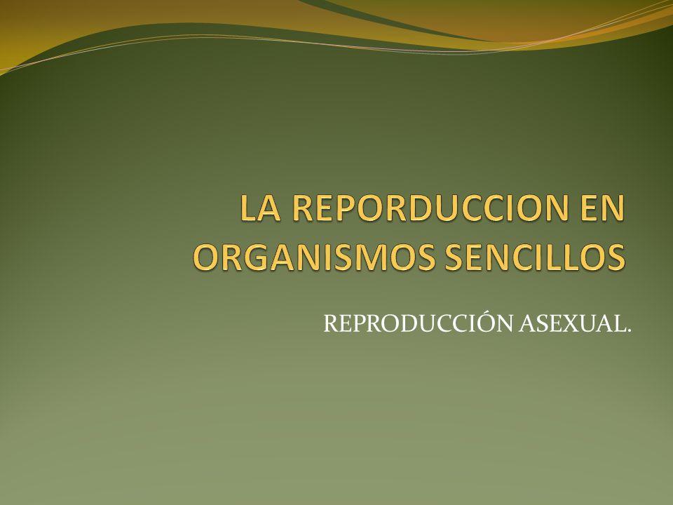 REPRODUCCIÓN ASEXUAL.