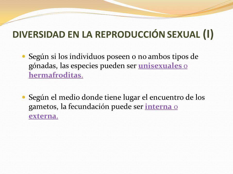 DIVERSIDAD EN LA REPRODUCCIÓN SEXUAL (I) Según si los individuos poseen o no ambos tipos de gónadas, las especies pueden ser unisexuales o hermafroditas.unisexuales o hermafroditas.