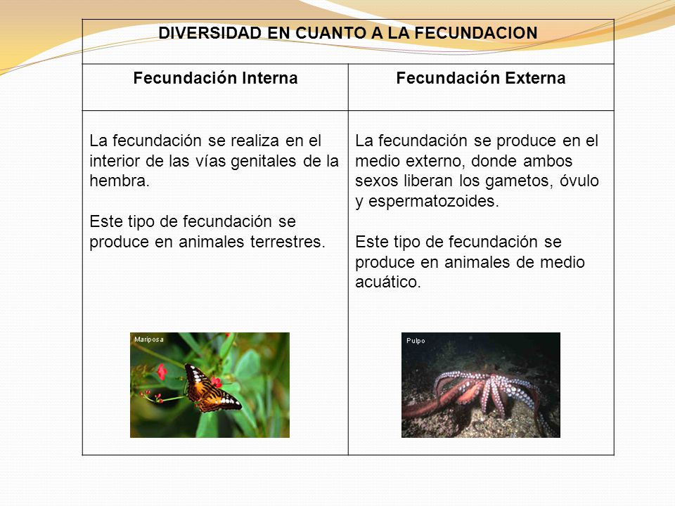 DIVERSIDAD EN CUANTO A LA FECUNDACION Fecundación InternaFecundación Externa La fecundación se realiza en el interior de las vías genitales de la hembra.
