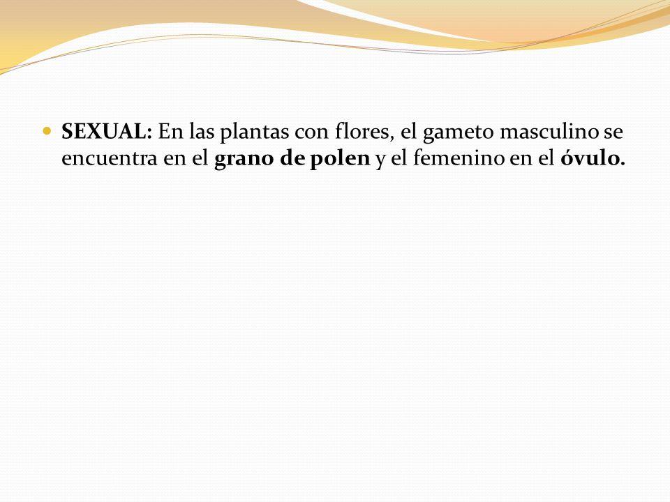 SEXUAL: En las plantas con flores, el gameto masculino se encuentra en el grano de polen y el femenino en el óvulo.
