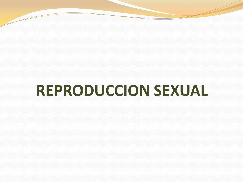 REPRODUCCION SEXUAL