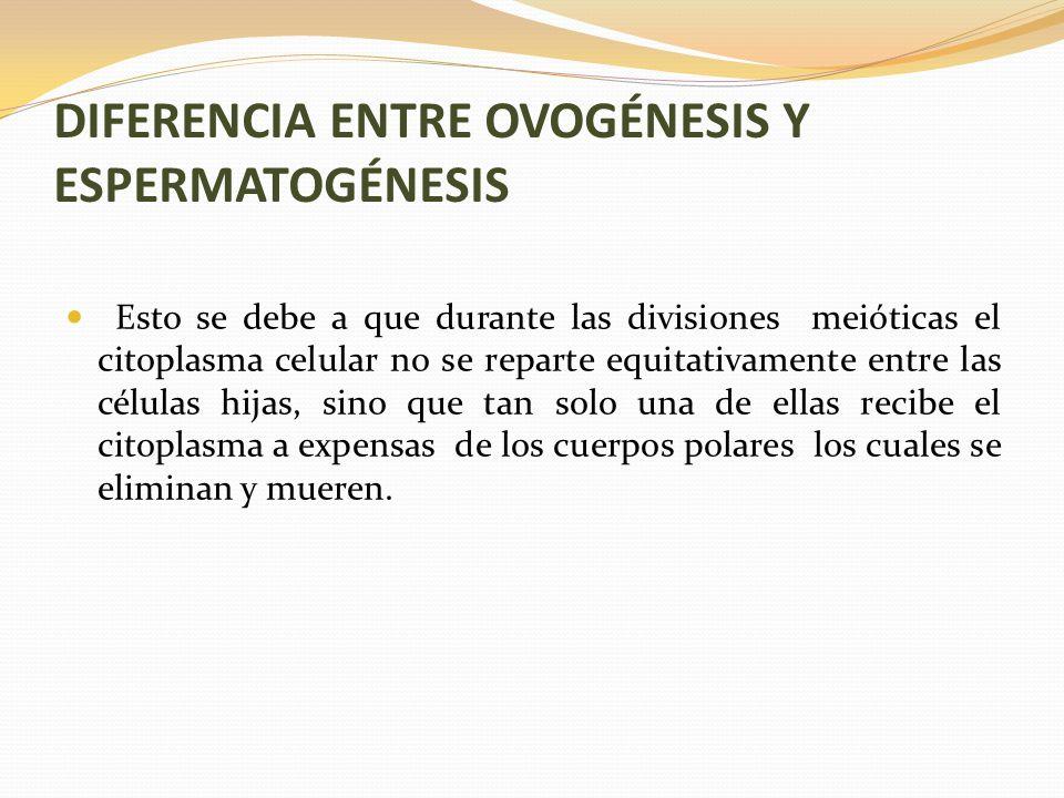 DIFERENCIA ENTRE OVOGÉNESIS Y ESPERMATOGÉNESIS Esto se debe a que durante las divisiones meióticas el citoplasma celular no se reparte equitativamente entre las células hijas, sino que tan solo una de ellas recibe el citoplasma a expensas de los cuerpos polares los cuales se eliminan y mueren.