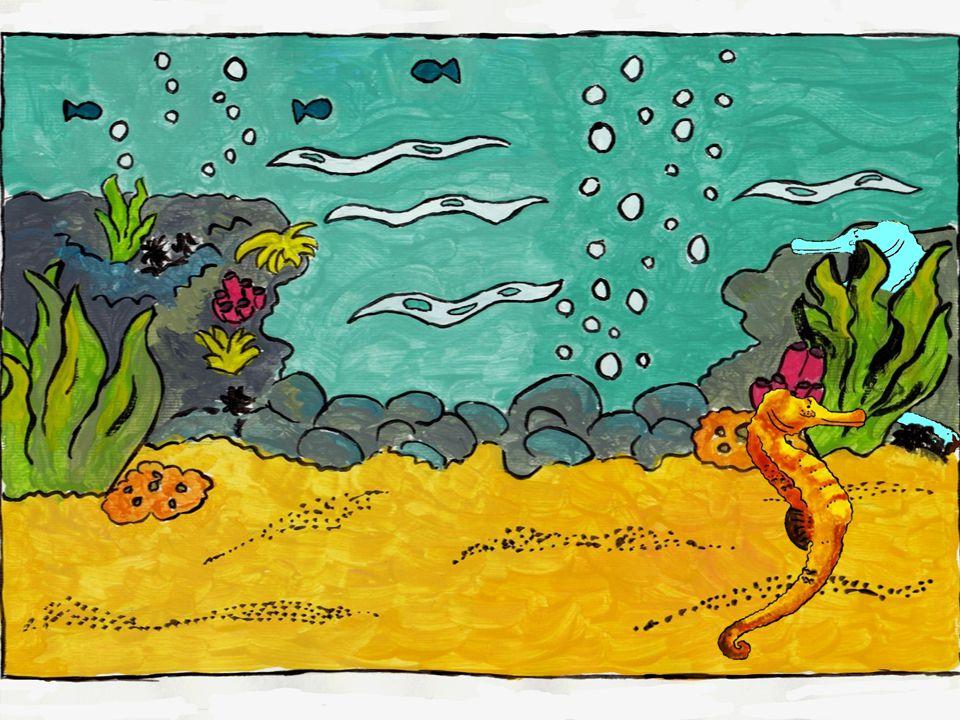 ¡Horsi! ¡Te puedo ver detrás de la estrella del mar!