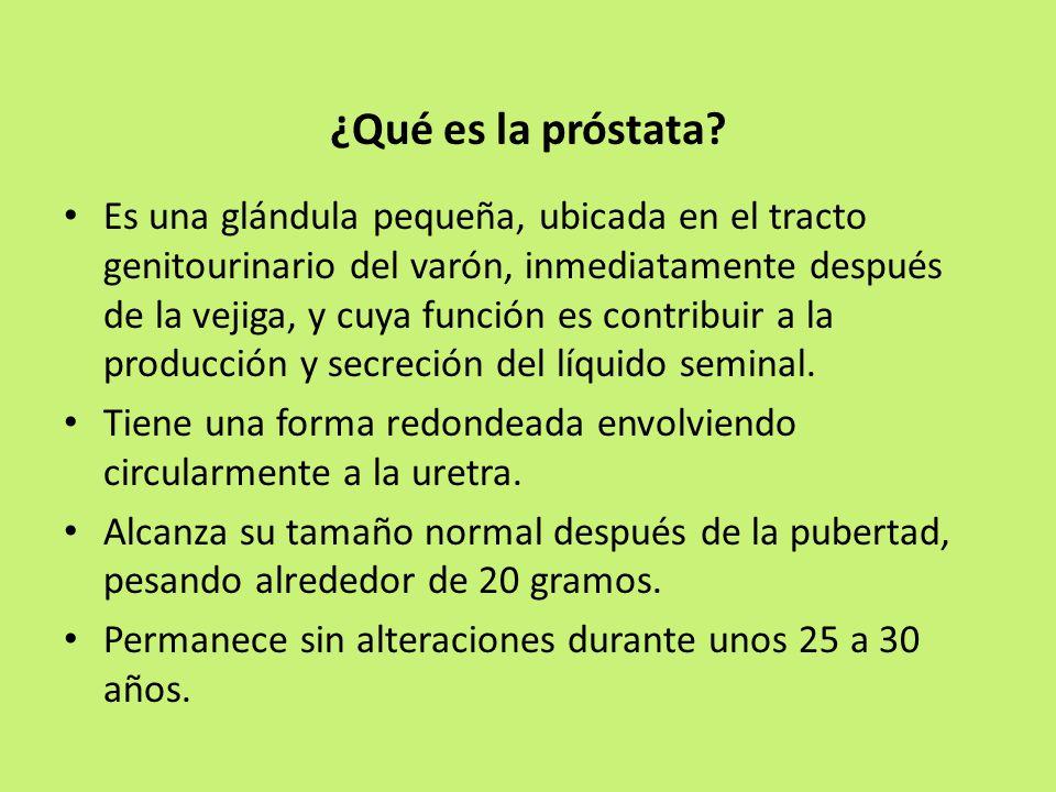 que funcion hace la prostata