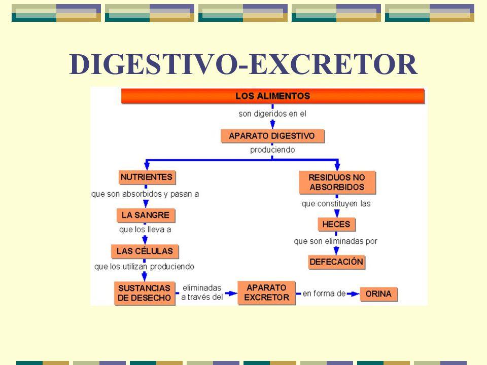DIGESTIVO-EXCRETOR