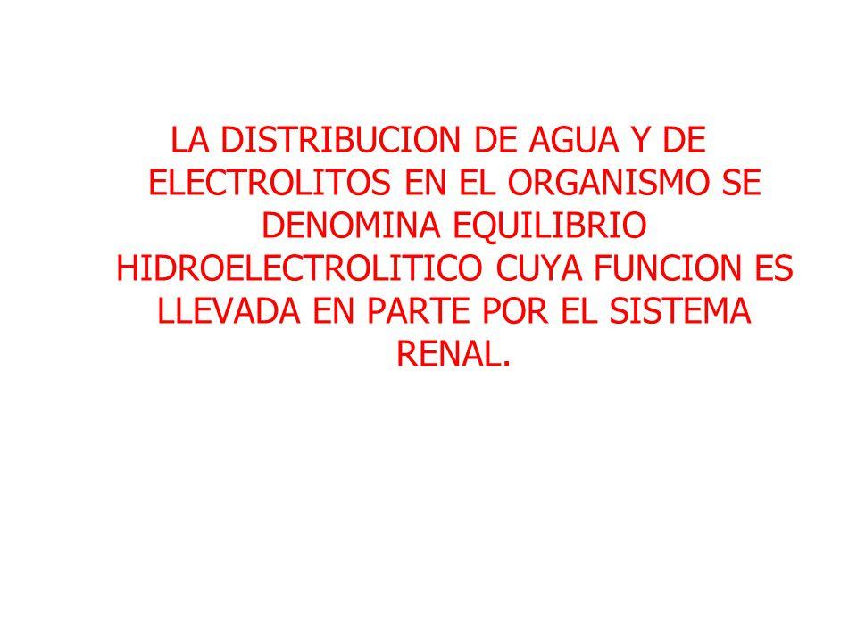 LA DISTRIBUCION DE AGUA Y DE ELECTROLITOS EN EL ORGANISMO SE DENOMINA EQUILIBRIO HIDROELECTROLITICO CUYA FUNCION ES LLEVADA EN PARTE POR EL SISTEMA RE