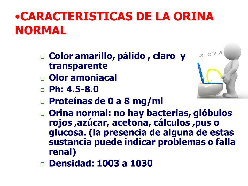 CARACTERISTICAS DE LA ORINA NORMAL  Color amarillo, pálido, claro y transparente  Olor amoniacal  Ph: 4.5-8.0  Proteínas de 0 a 8 mg/ml  Orina no