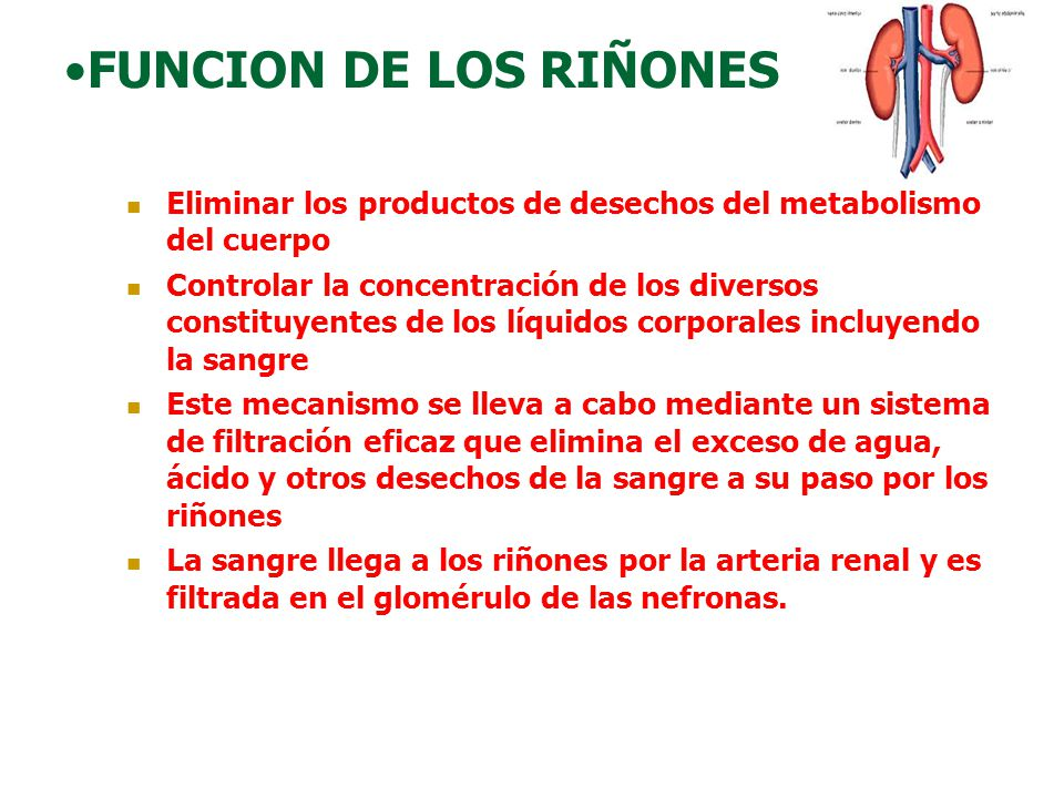 FUNCION DE LOS RIÑONES Eliminar los productos de desechos del metabolismo del cuerpo Controlar la concentración de los diversos constituyentes de los