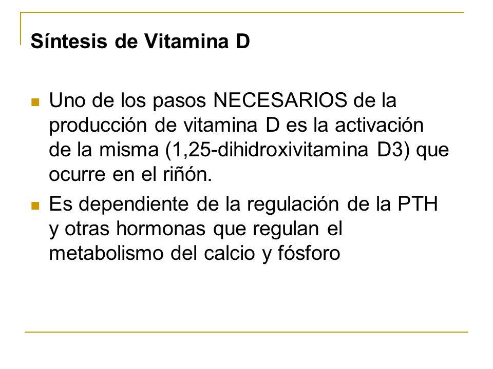 Síntesis de Vitamina D Uno de los pasos NECESARIOS de la producción de vitamina D es la activación de la misma (1,25-dihidroxivitamina D3) que ocurre