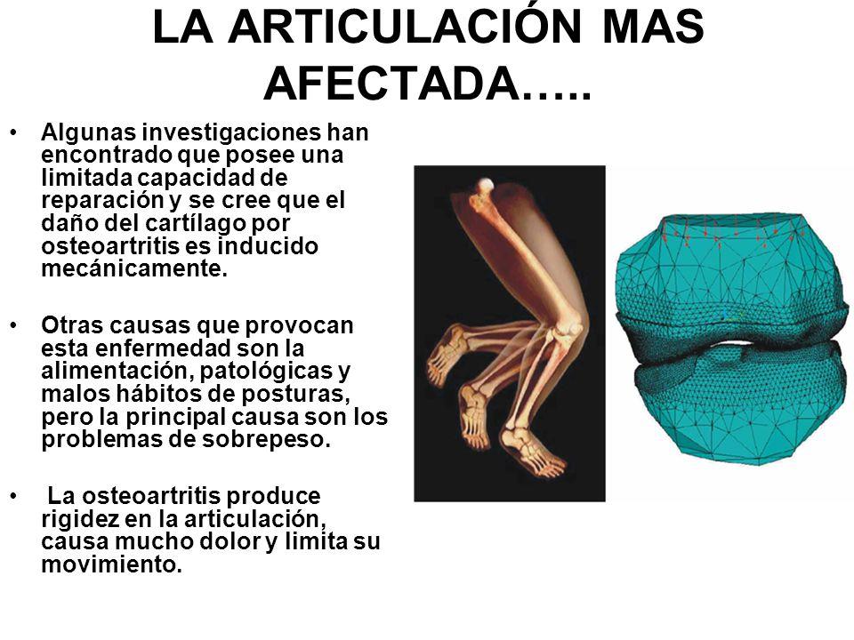 LA ARTICULACIÓN MAS AFECTADA….. Algunas investigaciones han encontrado que posee una limitada capacidad de reparación y se cree que el daño del cartíl