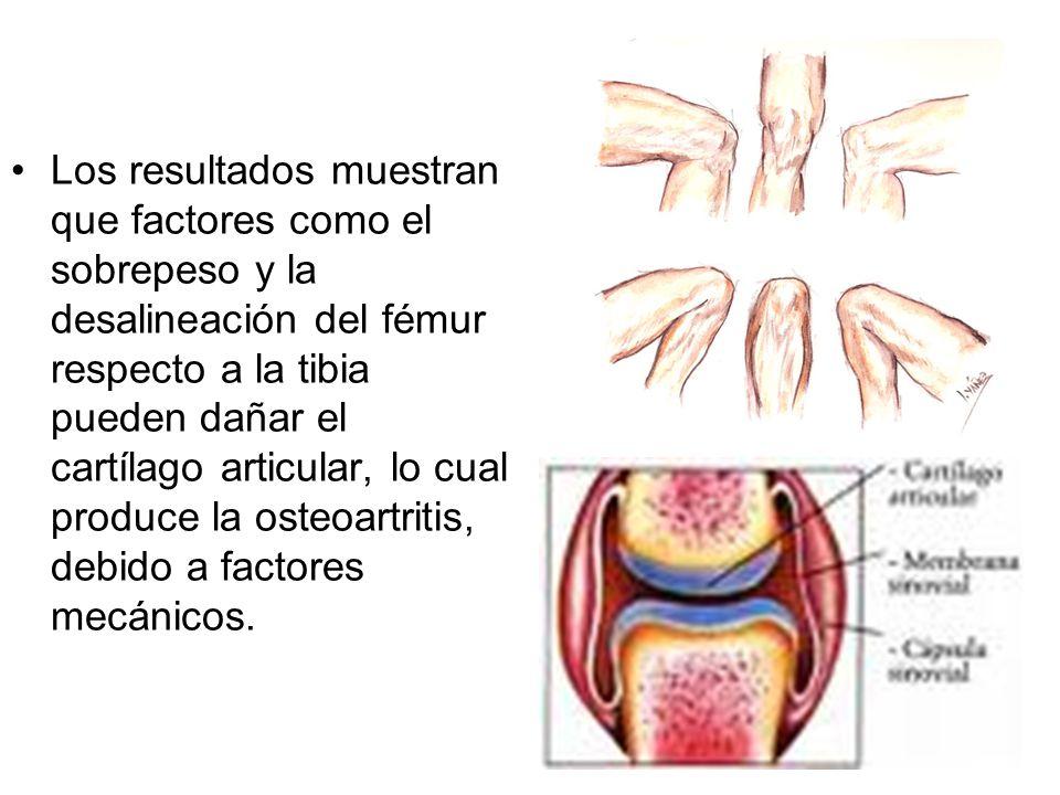 Los resultados muestran que factores como el sobrepeso y la desalineación del fémur respecto a la tibia pueden dañar el cartílago articular, lo cual p