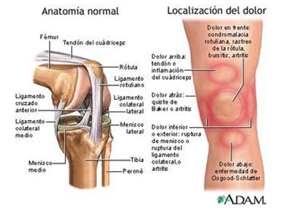 Encantador Anatomía De La Rodilla Izquierda Festooning - Imágenes de ...