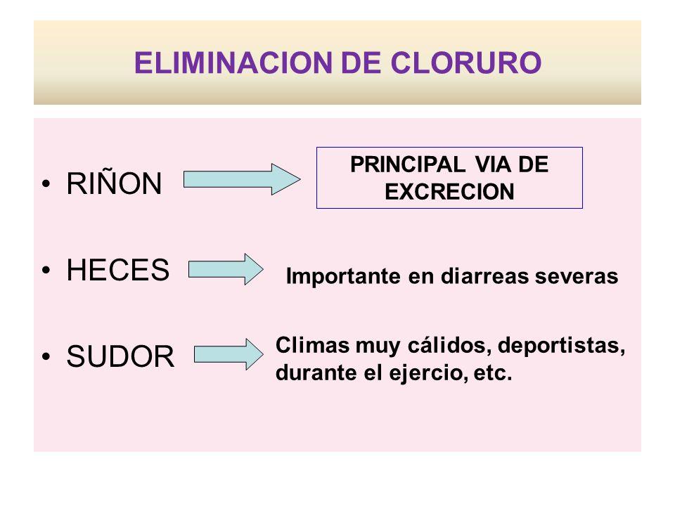 ELIMINACION DE CLORURO RIÑON HECES SUDOR Importante en diarreas severas Climas muy cálidos, deportistas, durante el ejercio, etc.