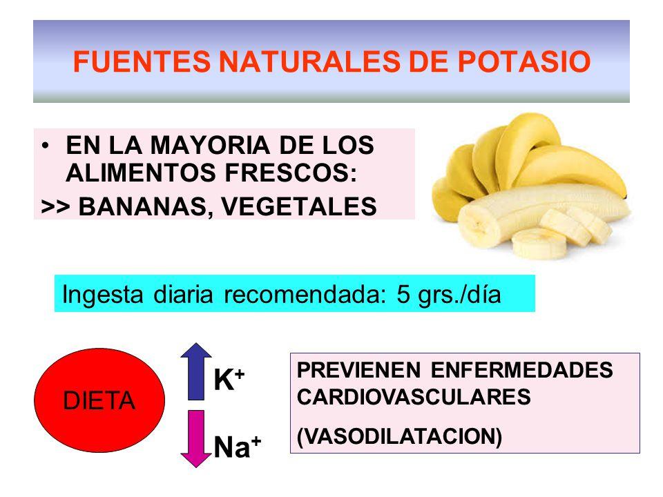 FUENTES NATURALES DE POTASIO EN LA MAYORIA DE LOS ALIMENTOS FRESCOS: >> BANANAS, VEGETALES Ingesta diaria recomendada: 5 grs./día DIETA K+K+ Na + PREVIENEN ENFERMEDADES CARDIOVASCULARES (VASODILATACION)