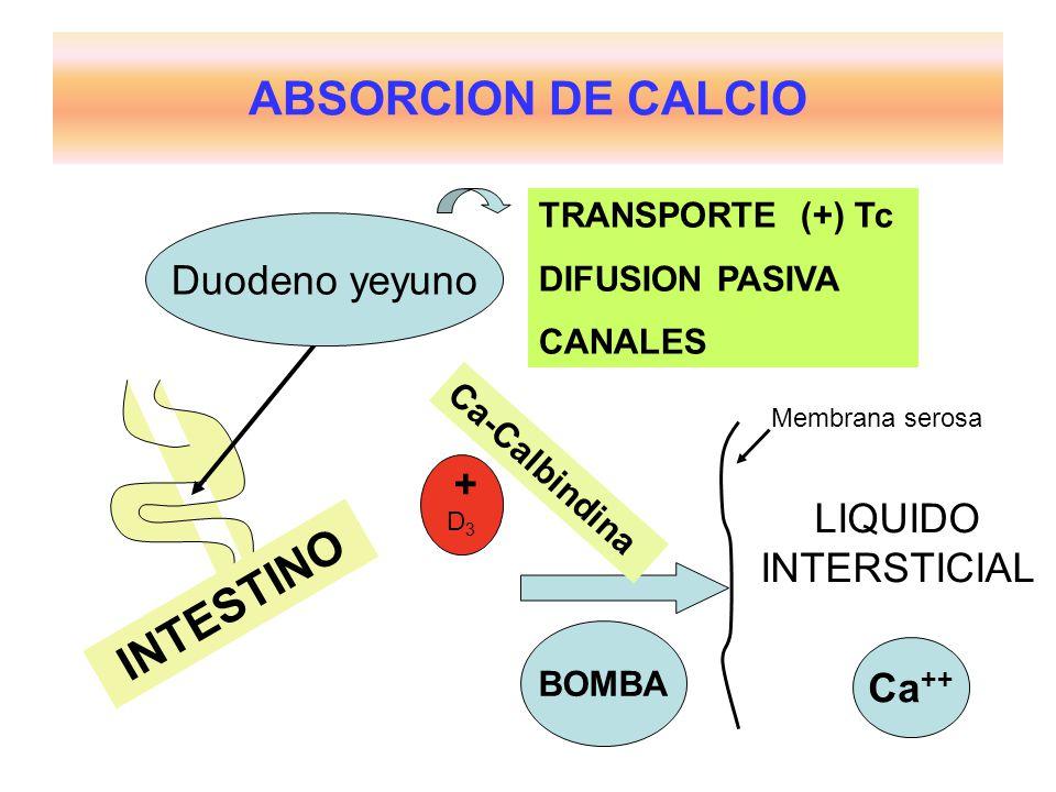ABSORCION DE CALCIO INTESTINO Duodeno yeyuno TRANSPORTE (+) Tc DIFUSION PASIVA CANALES LIQUIDO INTERSTICIAL BOMBA Ca-Calbindina D3D3 + Ca ++ Membrana serosa