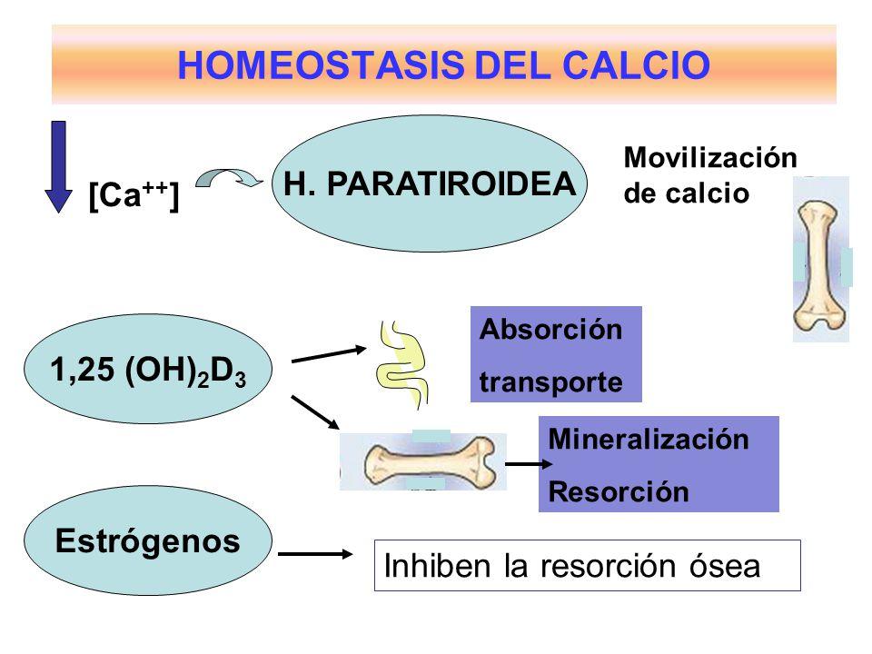 HOMEOSTASIS DEL CALCIO H. PARATIROIDEA 1,25 (OH) 2 D 3 [Ca ++ ] Movilización de calcio Absorción transporte Mineralización Resorción Estrógenos Inhibe
