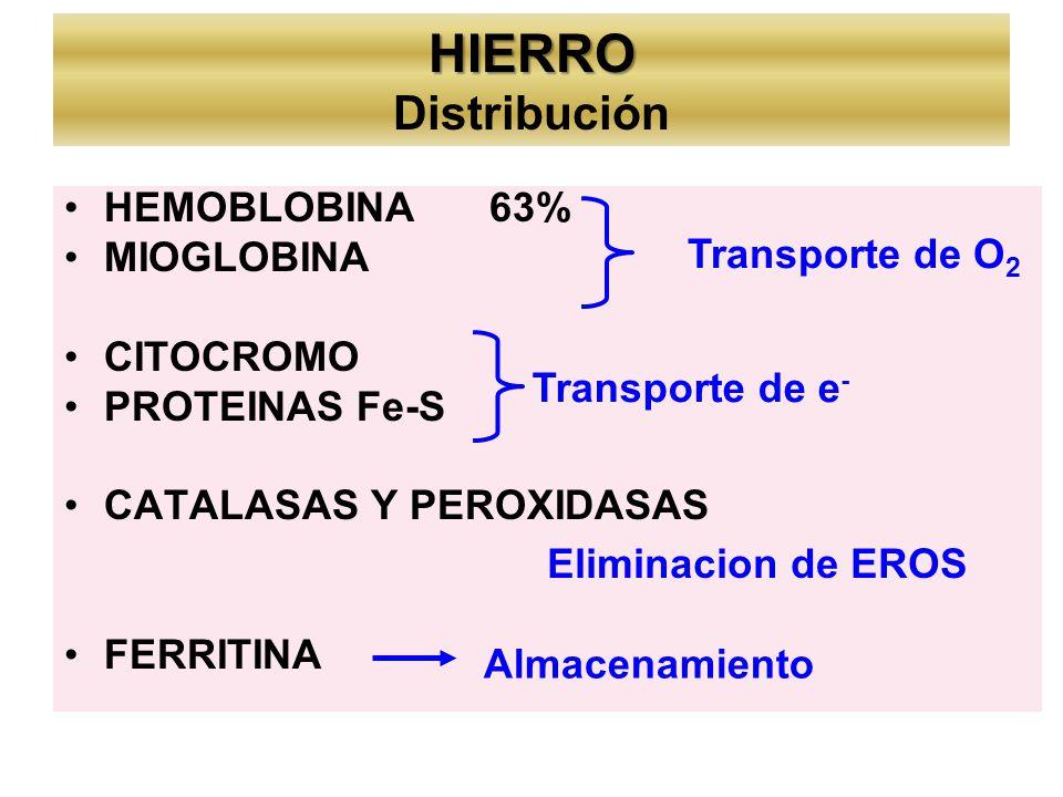 HIERRO HIERRO Distribución HEMOBLOBINA63% MIOGLOBINA CITOCROMO PROTEINAS Fe-S CATALASAS Y PEROXIDASAS FERRITINA Transporte de O 2 Transporte de e - Eliminacion de EROS Almacenamiento