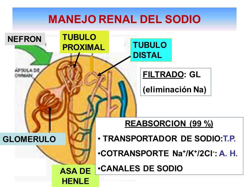 MANEJO RENAL DEL SODIO ASA DE HENLE TUBULO DISTAL NEFRON TUBULO PROXIMAL FILTRADO: GL (eliminación Na) GLOMERULO TUBULO COLECTOR REABSORCION (99 %) TRANSPORTADOR DE SODIO:T.P.