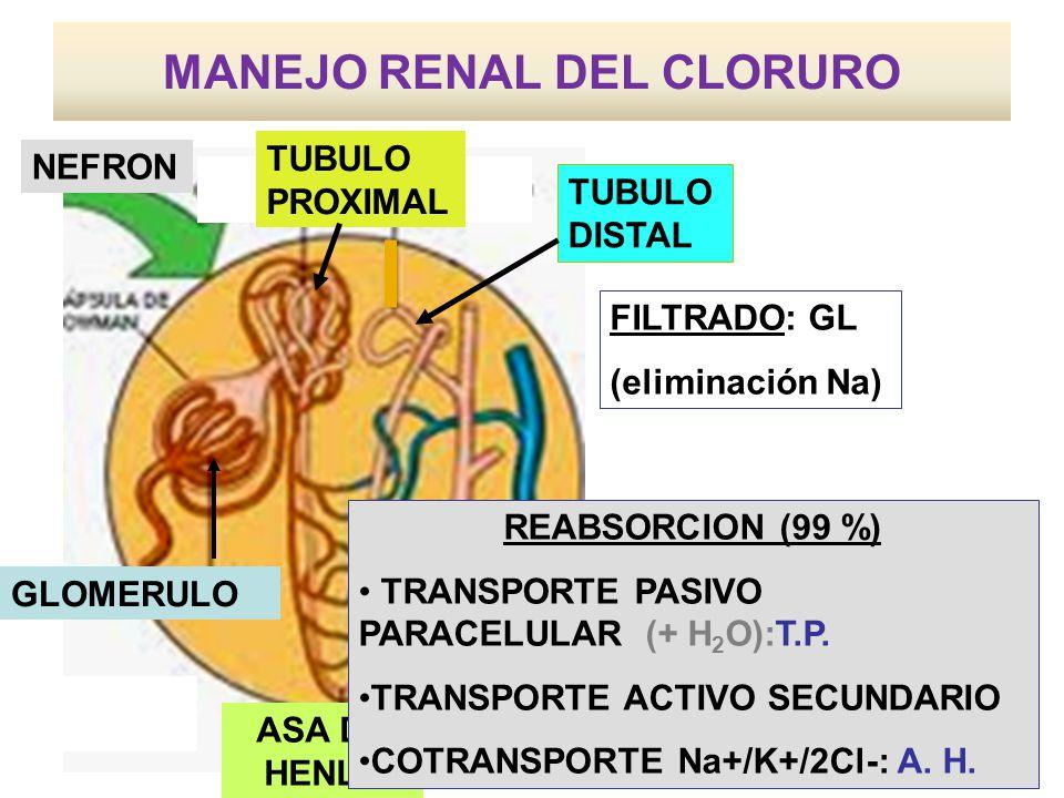 MANEJO RENAL DEL CLORURO ASA DE HENLE TUBULO DISTAL NEFRON TUBULO PROXIMAL FILTRADO: GL (eliminación Na) GLOMERULO TUBULO COLECTOR REABSORCION (99 %)