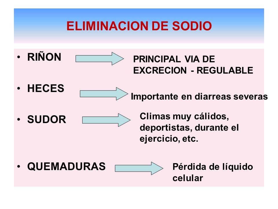 ELIMINACION DE SODIO RIÑON HECES SUDOR QUEMADURAS Importante en diarreas severas Climas muy cálidos, deportistas, durante el ejercicio, etc.