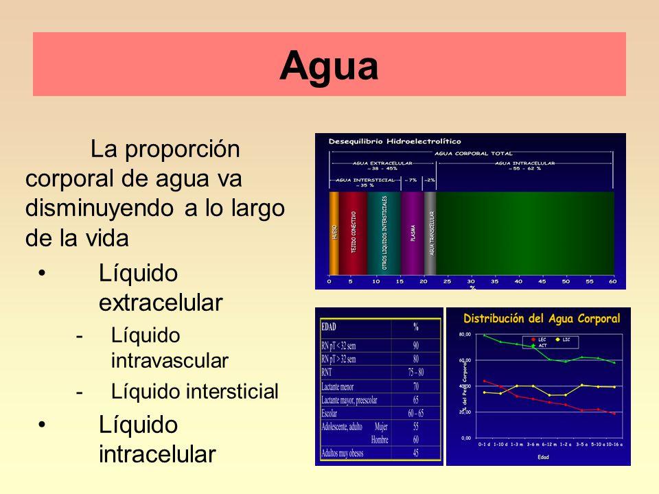 4 Agua La proporción corporal de agua va disminuyendo a lo largo de la vida Líquido extracelular -Líquido intravascular -Líquido intersticial Líquido intracelular