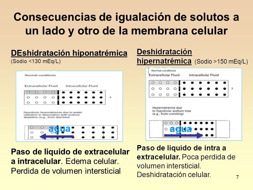 7 Consecuencias de igualación de solutos a un lado y otro de la membrana celular DEshidratación hiponatrémica (Sodio <130 mEq/L) Paso de liquido de ex