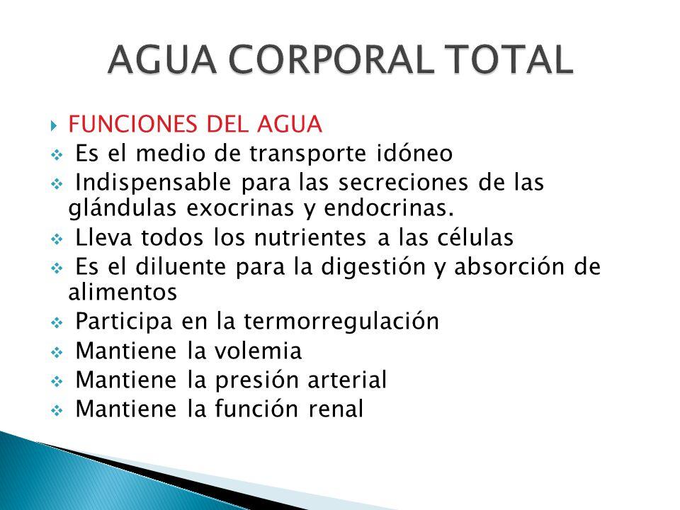  FUNCIONES DEL AGUA  Es el medio de transporte idóneo  Indispensable para las secreciones de las glándulas exocrinas y endocrinas.