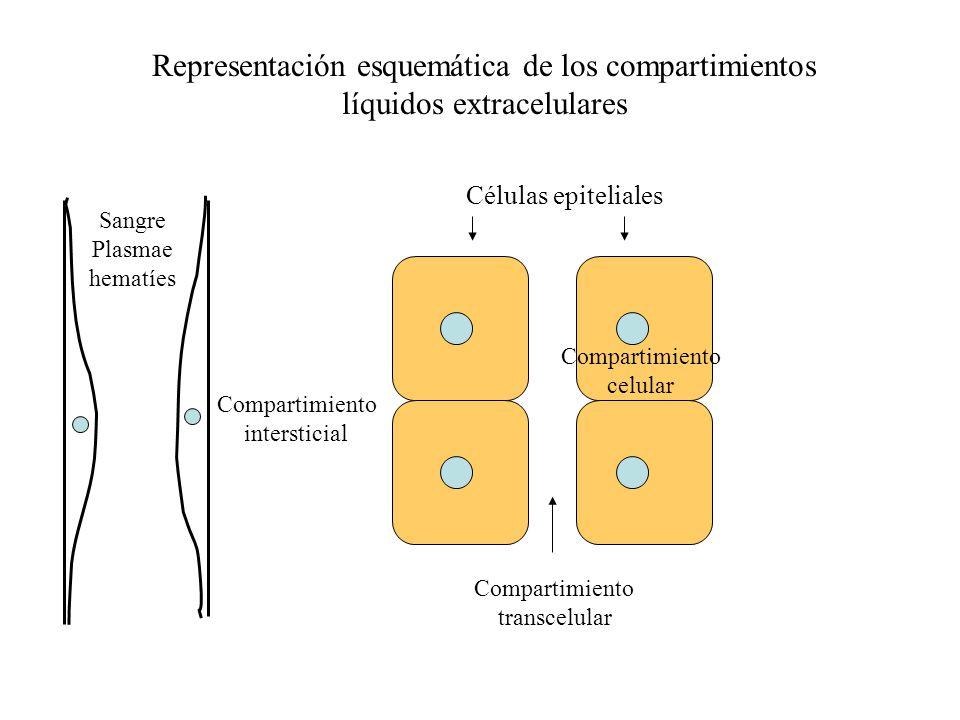 Composición iónica de los compartimientos líquidos El agua del LIC y LEC contiene sustancias que le son comunes a ambos compartimientos, difusibles a través de las membranas celulares y no ionizables.