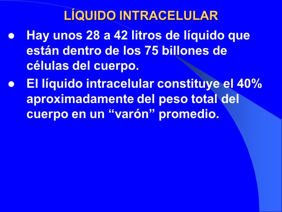 LÍQUIDO INTRACELULAR Hay unos 28 a 42 litros de líquido que están dentro de los 75 billones de células del cuerpo. El líquido intracelular constituye