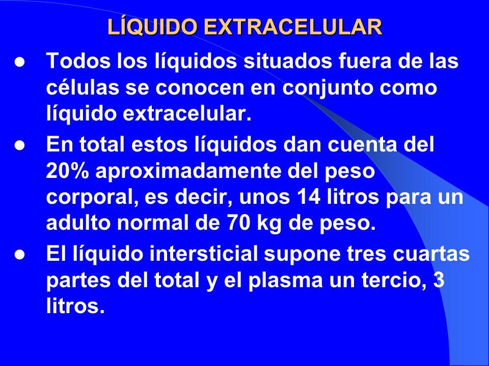 LÍQUIDO EXTRACELULAR Todos los líquidos situados fuera de las células se conocen en conjunto como líquido extracelular. En total estos líquidos dan cu