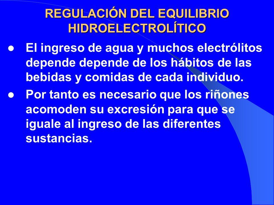 REGULACIÓN DEL EQUILIBRIO HIDROELECTROLÍTICO El ingreso de agua y muchos electrólitos depende depende de los hábitos de las bebidas y comidas de cada