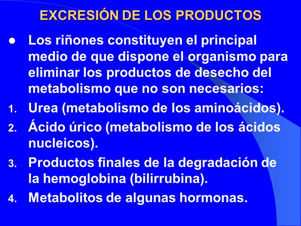 EXCRESIÓN DE LOS PRODUCTOS Los riñones constituyen el principal medio de que dispone el organismo para eliminar los productos de desecho del metabolis