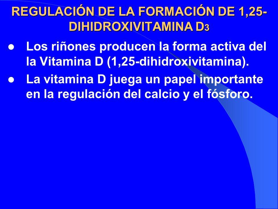 REGULACIÓN DE LA FORMACIÓN DE 1,25- DIHIDROXIVITAMINA D 3 Los riñones producen la forma activa del la Vitamina D (1,25-dihidroxivitamina). La vitamina