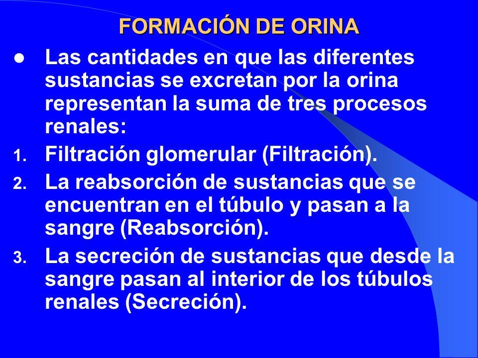 FORMACIÓN DE ORINA Las cantidades en que las diferentes sustancias se excretan por la orina representan la suma de tres procesos renales: 1. Filtració