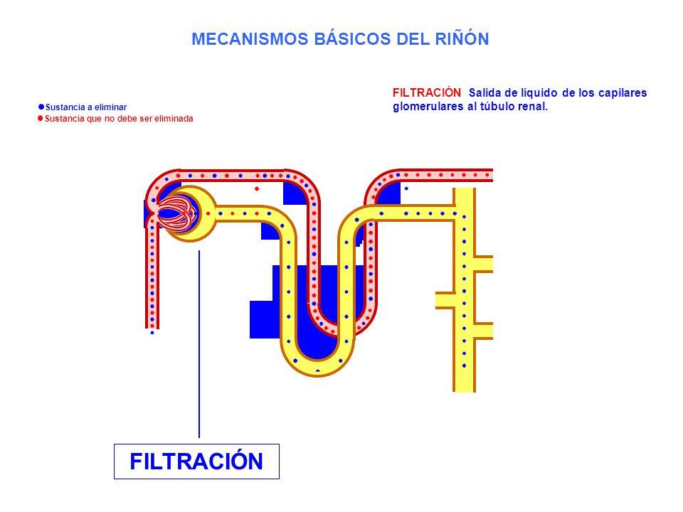 FILTRACIÓN: Salida de líquido de los capilares glomerulares al túbulo renal. FILTRACIÓN MECANISMOS BÁSICOS DEL RIÑÓN Sustancia a eliminar Sustancia qu
