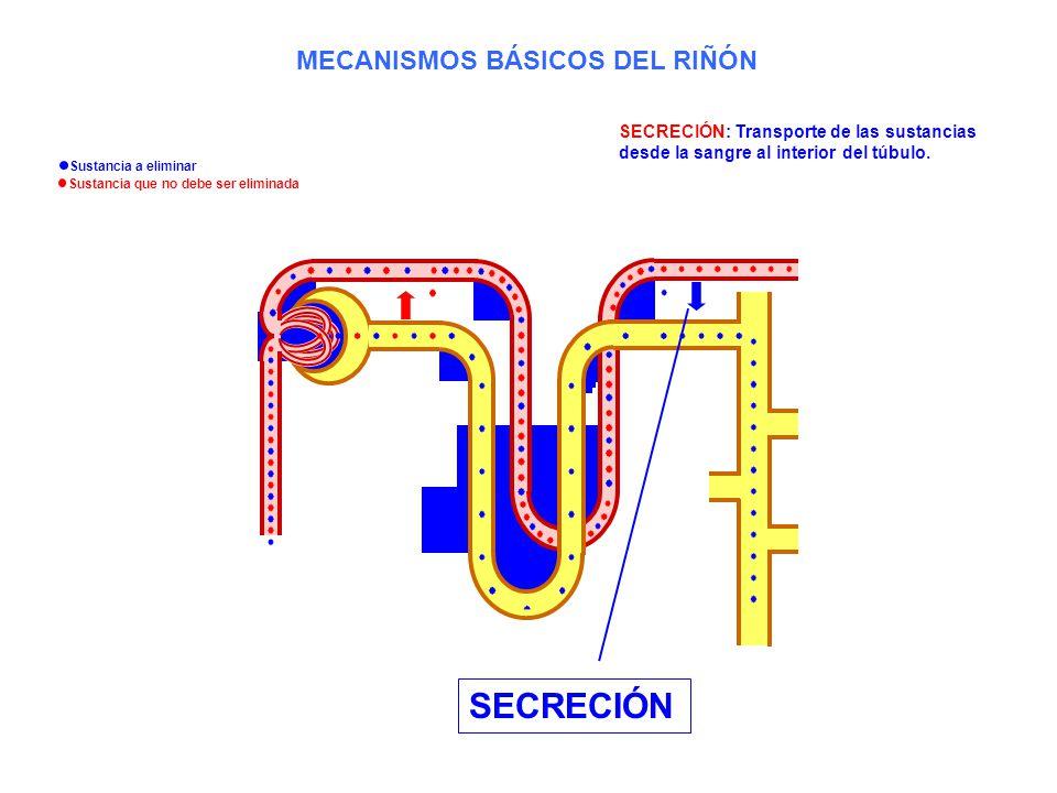SECRECIÓN SECRECIÓN: Transporte de las sustancias desde la sangre al interior del túbulo. MECANISMOS BÁSICOS DEL RIÑÓN Sustancia a eliminar Sustancia