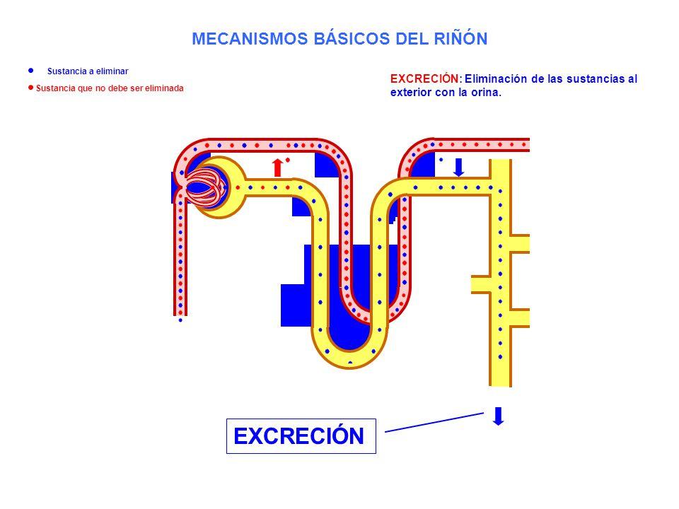 EXCRECIÓN: Eliminación de las sustancias al exterior con la orina. EXCRECIÓN MECANISMOS BÁSICOS DEL RIÑÓN Sustancia a eliminar Sustancia que no debe s