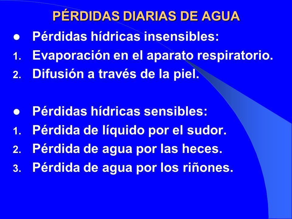 PÉRDIDAS DIARIAS DE AGUA Pérdidas hídricas insensibles: 1. Evaporación en el aparato respiratorio. 2. Difusión a través de la piel. Pérdidas hídricas