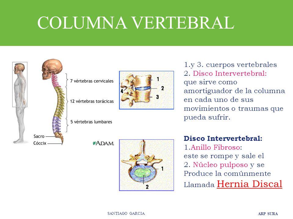 ARP SURA SANTIAGO GARCIA 1.y 3.cuerpos vertebrales 2.