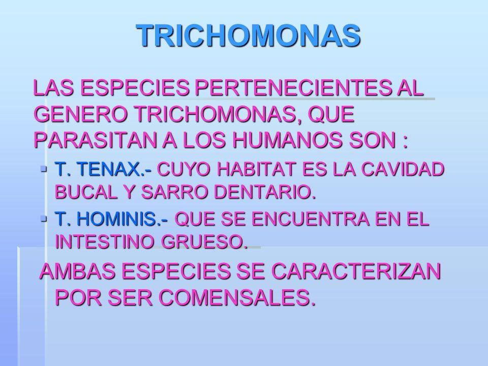 TRICHOMONAS LAS ESPECIES PERTENECIENTES AL GENERO TRICHOMONAS, QUE PARASITAN A LOS HUMANOS SON : LAS ESPECIES PERTENECIENTES AL GENERO TRICHOMONAS, QU