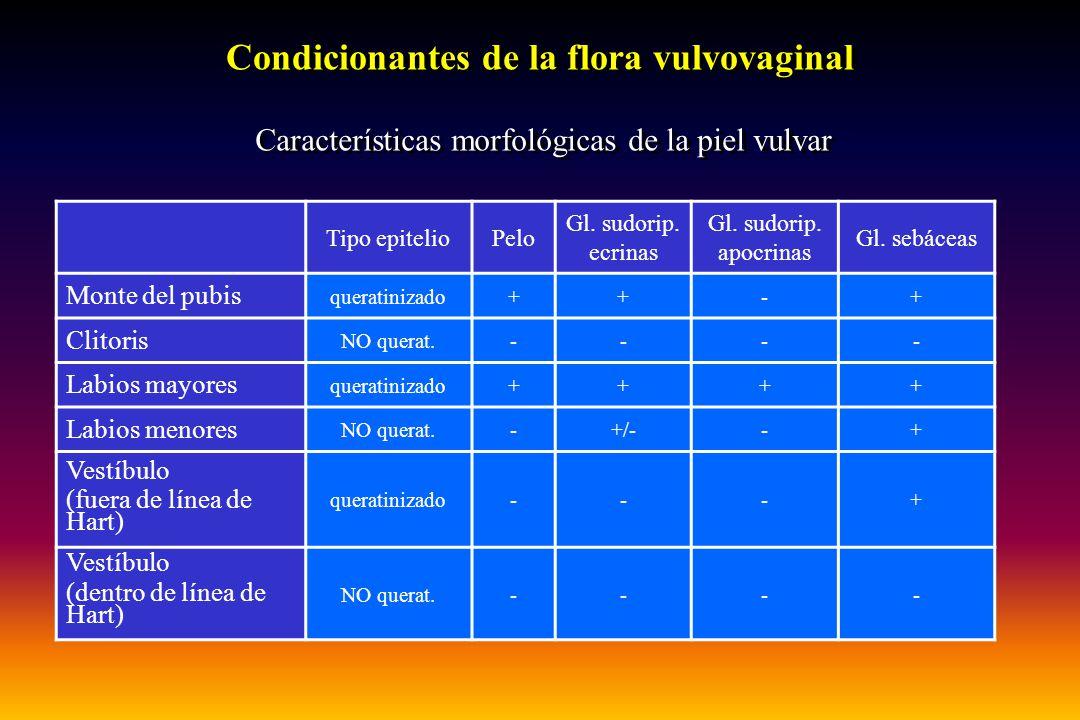Tipo epitelioPelo Gl. sudorip. ecrinas Gl. sudorip. apocrinas Gl. sebáceas Monte del pubis queratinizado++-+ Clitoris NO querat.---- Labios mayores qu
