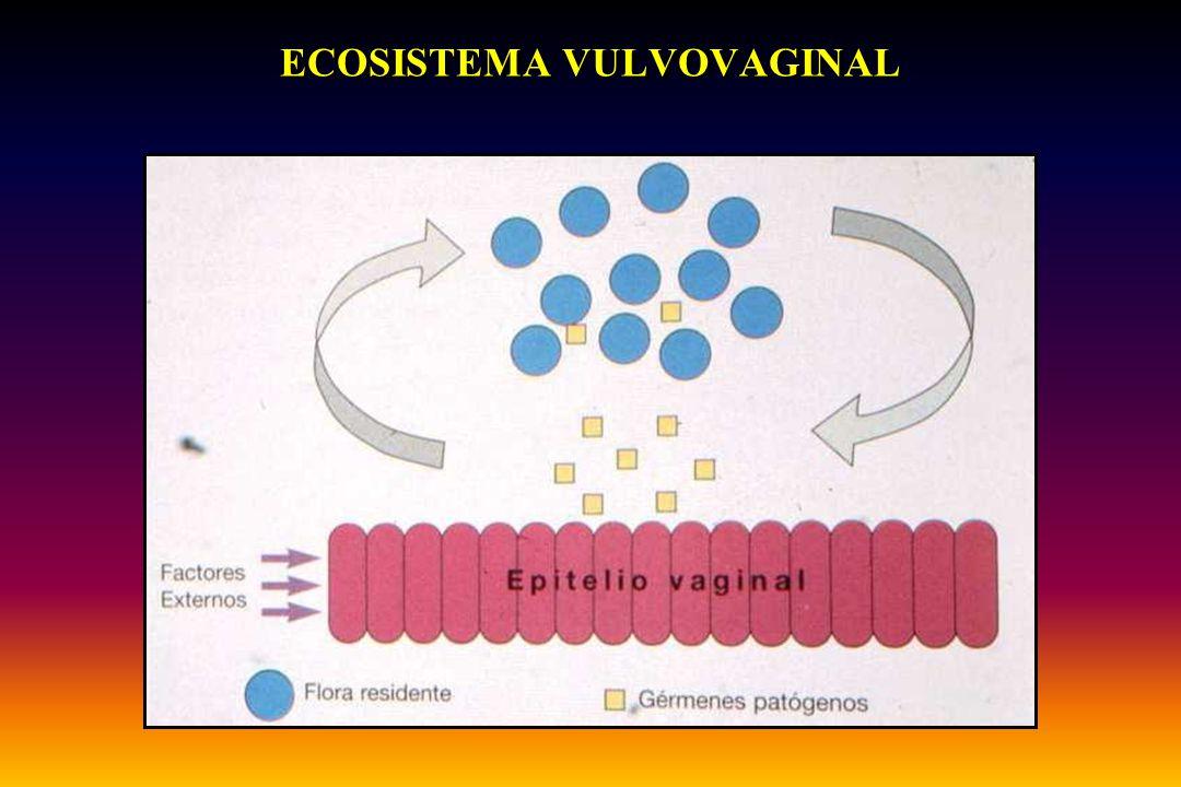 VULVOVAGINITIS Diagnóstico diferencial SíntomasFlujoExploraciónpHKOH 10% NormalNOClaroNormal< 4,5negativo CandidiasisPrurito Blanco grumoso Enrrojecimiento<4,5pseudohifas Tricomonas Prurito + Leucorrea Verdoso espumoso Enrrojecimiento>4,5 olor aminas (50% ) Vaginosis Leucorrea muy abundante Grisáceo líquido Casi normal>4,5 olor aminas (99%)