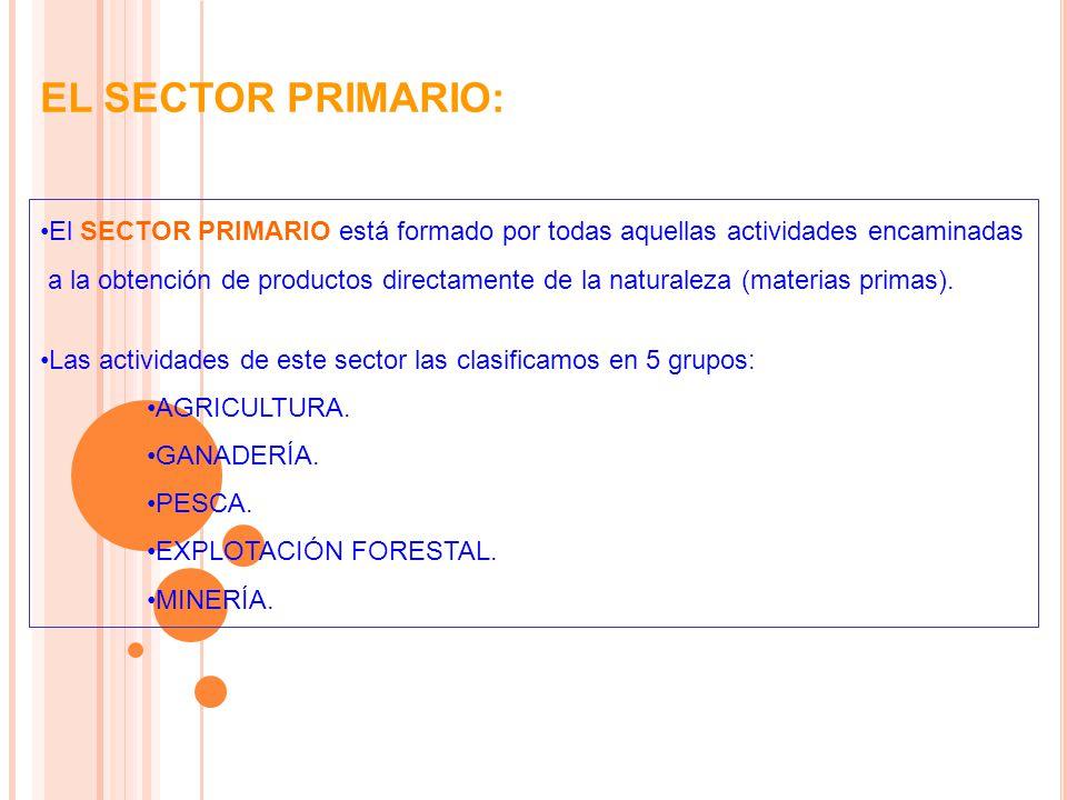 EL SECTOR PRIMARIO: El SECTOR PRIMARIO está formado por todas aquellas actividades encaminadas a la obtención de productos directamente de la naturaleza (materias primas).
