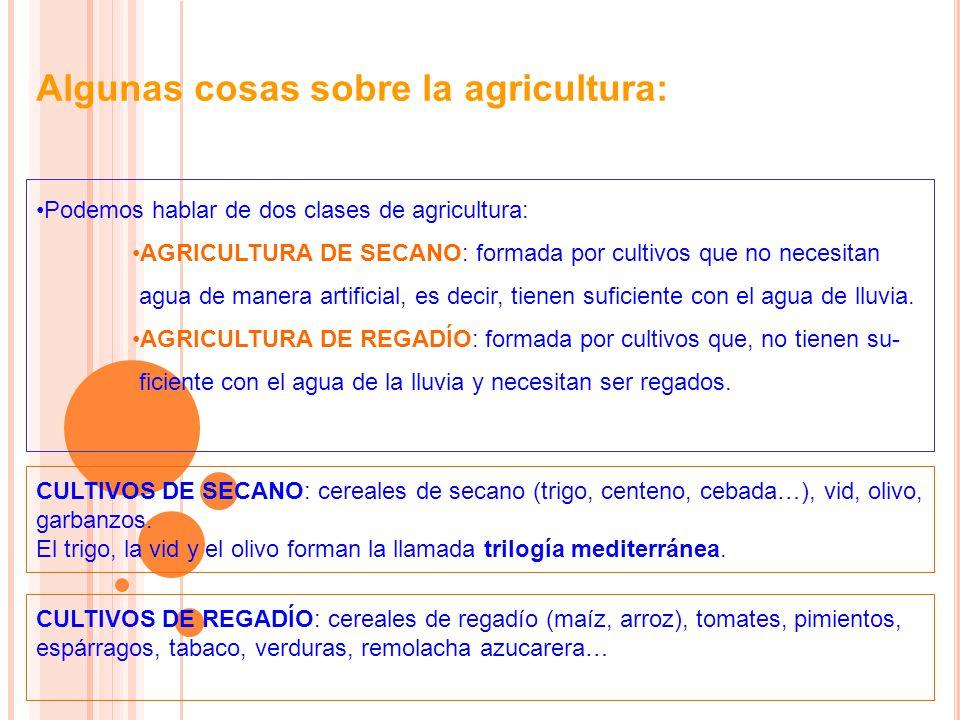 Algunas cosas sobre la agricultura: Podemos hablar de dos clases de agricultura: AGRICULTURA DE SECANO: formada por cultivos que no necesitan agua de manera artificial, es decir, tienen suficiente con el agua de lluvia.