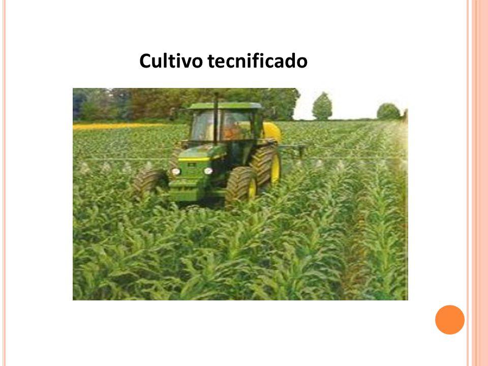 Cultivo tecnificado