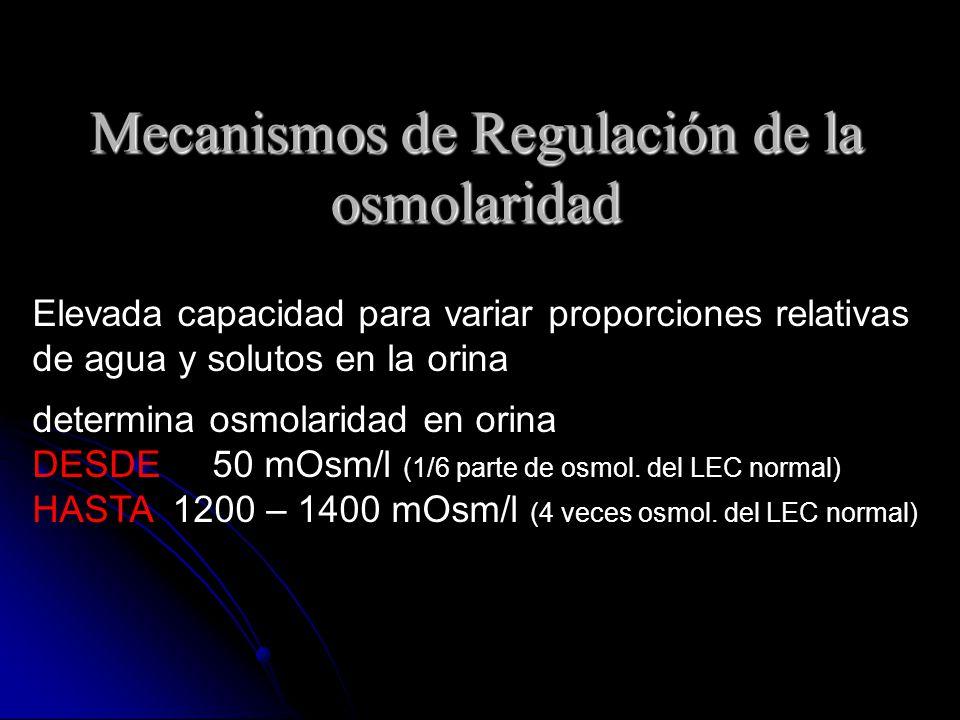 Mecanismos de Regulación de la osmolaridad Elevada capacidad para variar proporciones relativas de agua y solutos en la orina determina osmolaridad en orina DESDE 50 mOsm/l (1/6 parte de osmol.