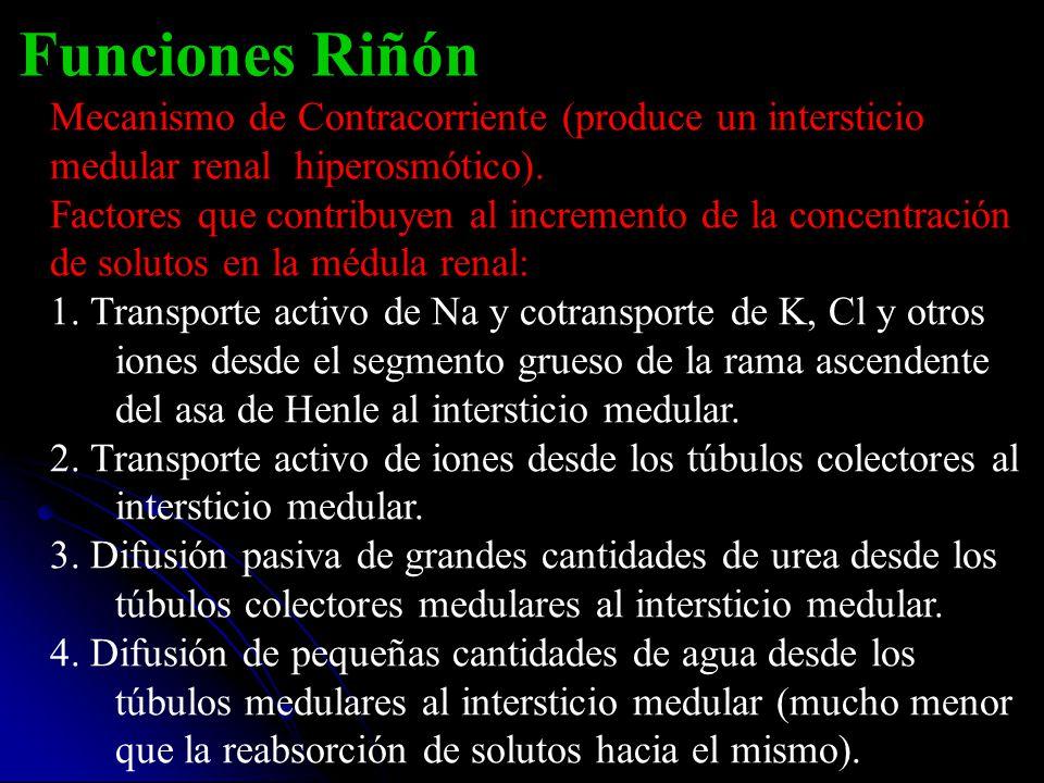 Funciones Riñón Mecanismo de Contracorriente (produce un intersticio medular renal hiperosmótico).